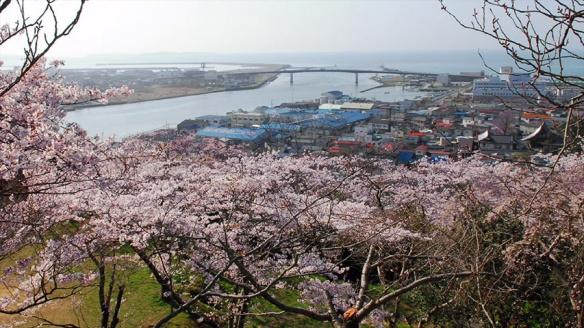 IshinomakiSakura